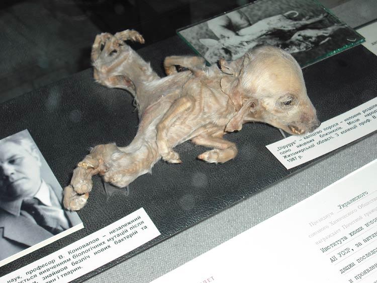 dog malformation
