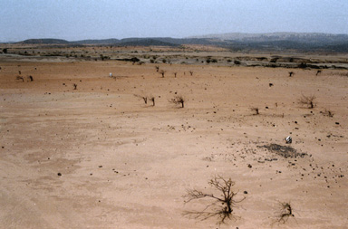desertion / what will happen if global warming continues